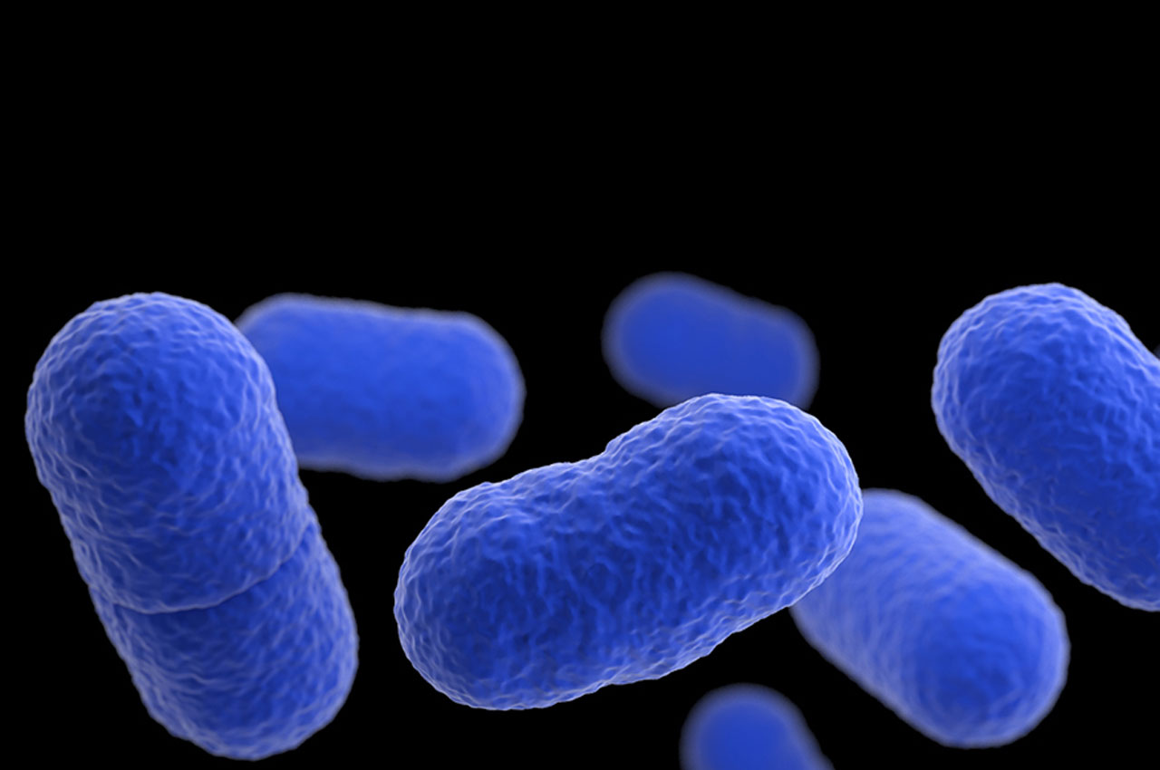 Listeria food poisoning